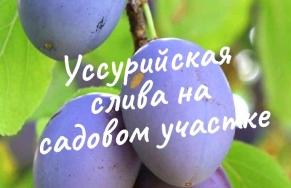 11.11. - Прямая трансляция лекции